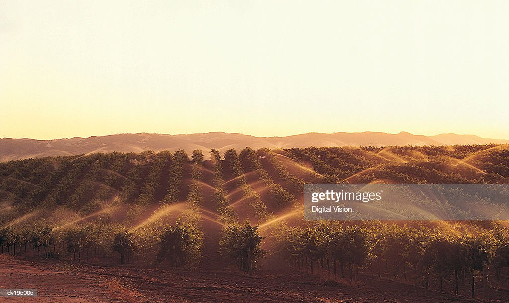 Field irrigation : Stock Photo