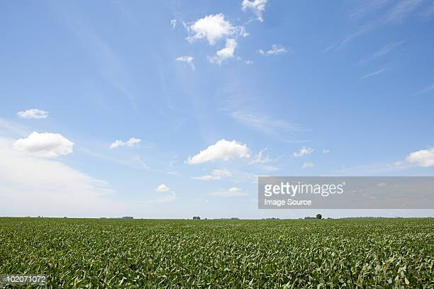 field landscape in argentina - wide angle stock pictures, royalty-free photos & images