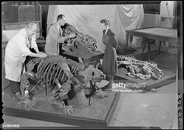Field Museum preparator Stanley J Kuczek left and Chief Preparator Orville 'Gilly' L Gilpin and Mrs Helen Moyer repair minor injuries to ancient...