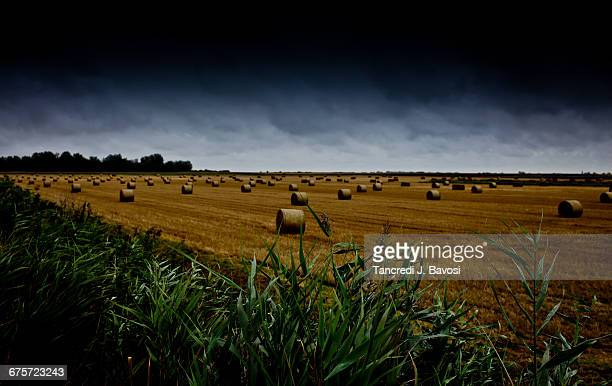 field near kraków - bavosi stock pictures, royalty-free photos & images