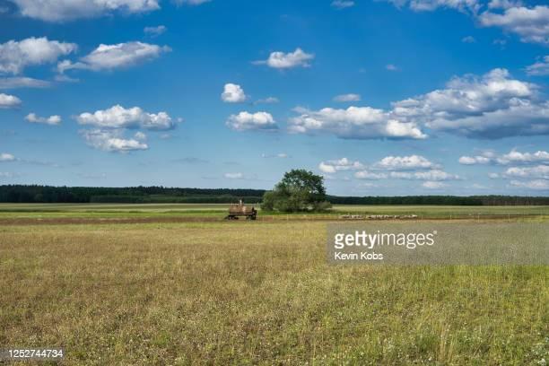 field near the village of merz in brandenburg, germany. - ländliches motiv stock-fotos und bilder