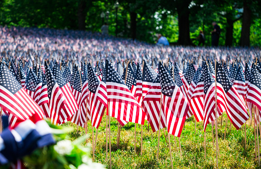 A Field Of American Flags On A Grassy Hill In Boston Common Park 1135805187