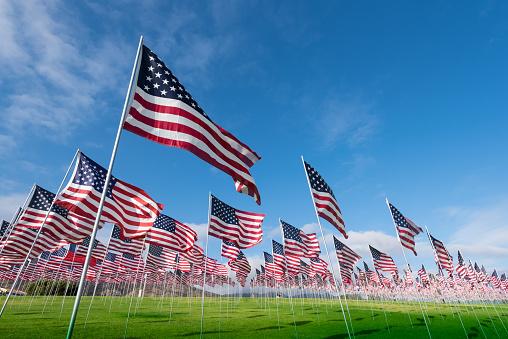Field of American Flags 519165646