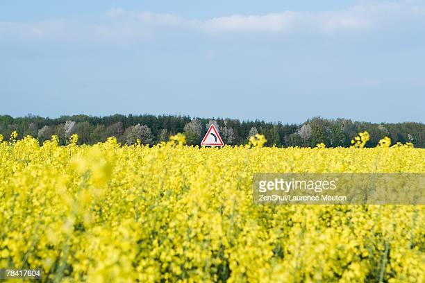 Field of canola and curve sign