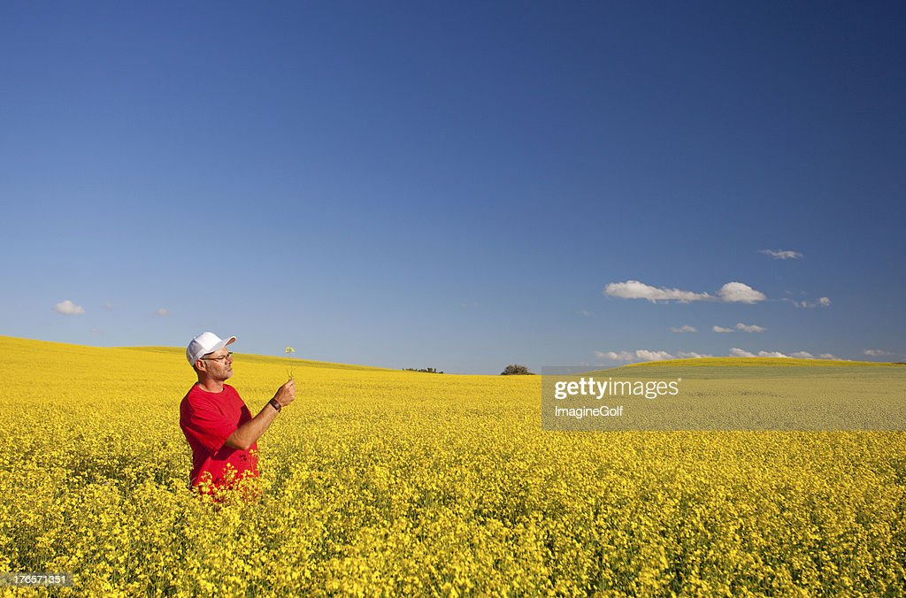 field of canola crops with farmer : Stock Photo