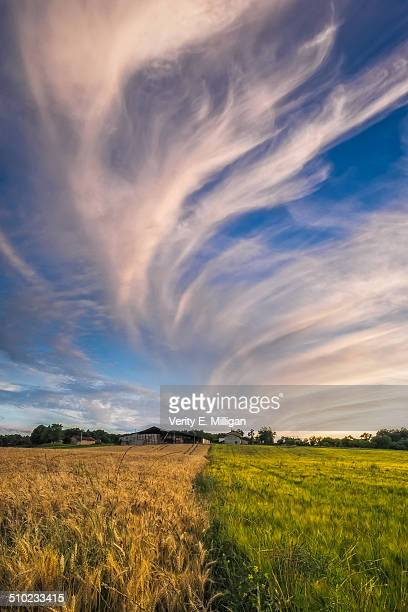 field of crops below epic clouds at sunset - charente stock pictures, royalty-free photos & images