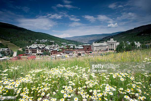 A field of daisies adorns Beaver Creek Resort in Colorado in the summer.