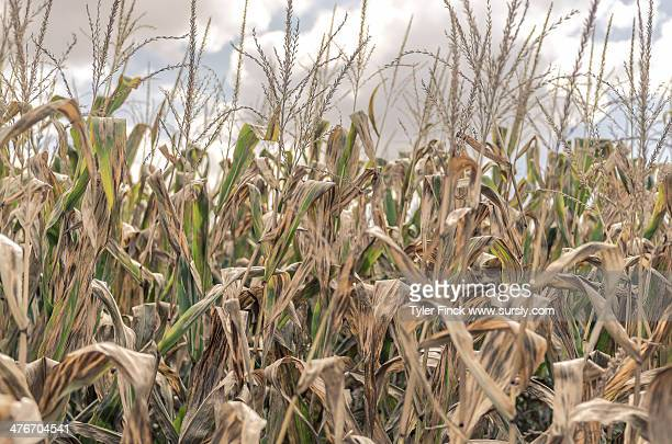 field of fall - sursly stock pictures, royalty-free photos & images