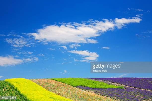 Field of flowers, Hokkaido Prefecture, Japan