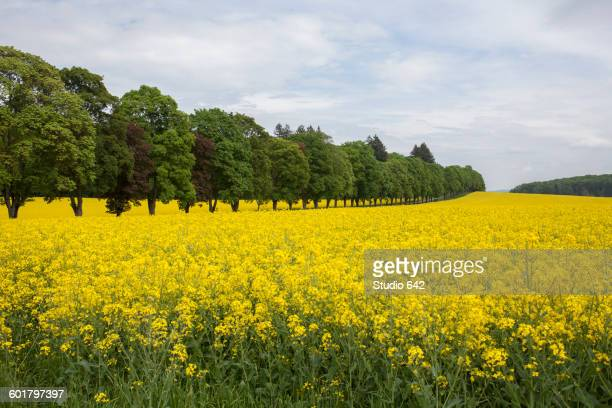 Field of flowers in rural landscape