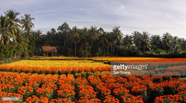 Field of flowers on the countryside