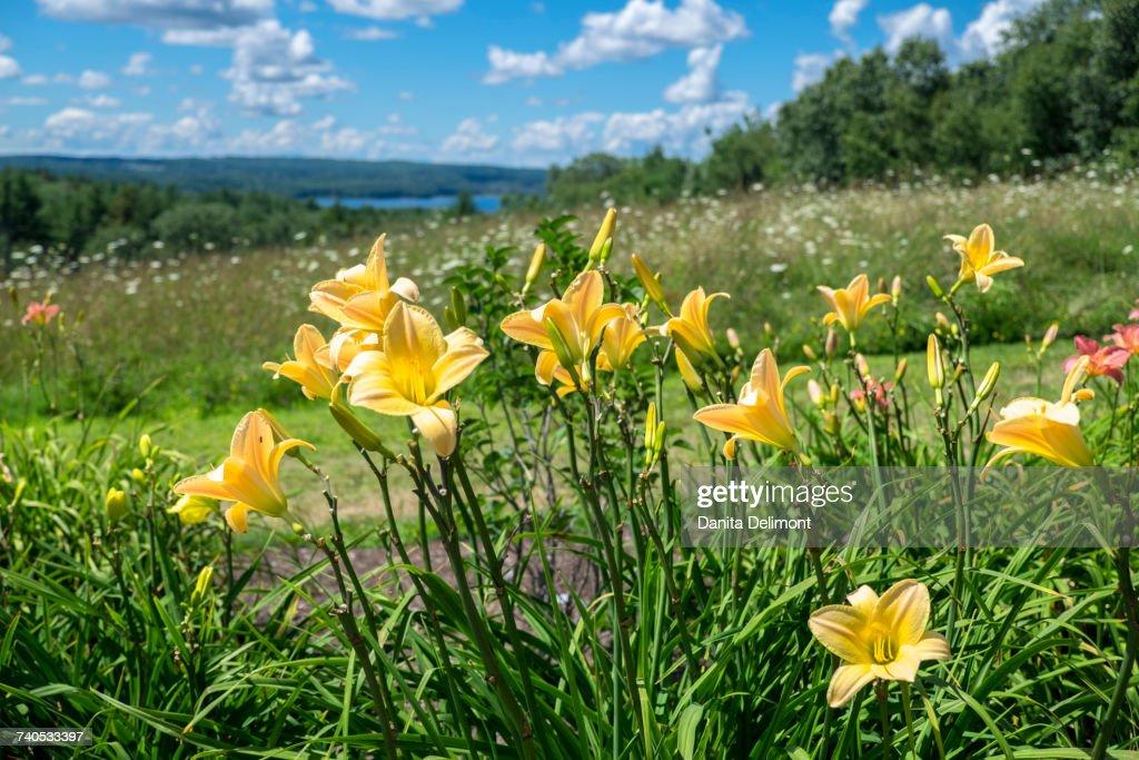 Field Of Flowers Tower Hill Botanical Garden Boylston Massachusetts ...