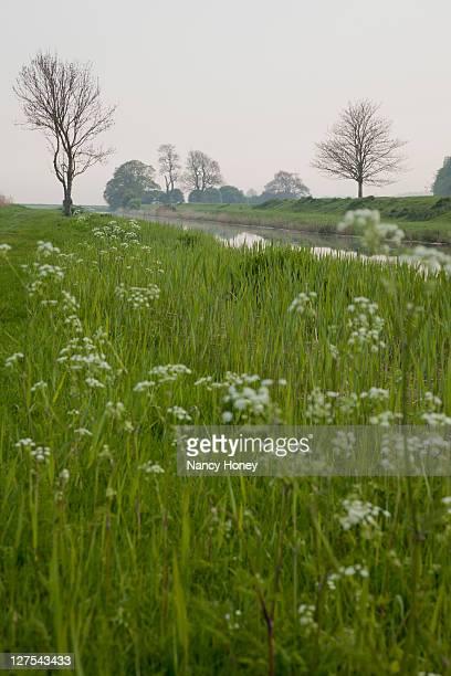 フィールドの花と川 - サセックス ストックフォトと画像