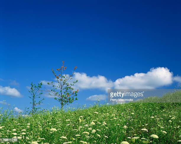 field of flowers with sky and clouds - laval canada stock pictures, royalty-free photos & images