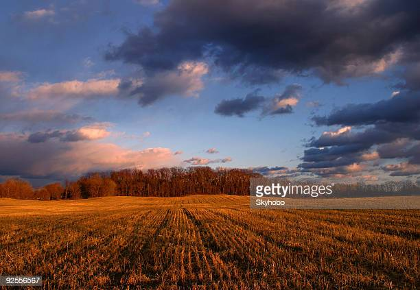 Field of grains at sunset under a cloudy sky