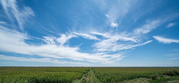 Field of grass and sky - gettyimageskorea