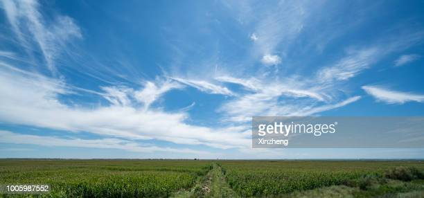 field of grass and sky - panoramic stock pictures, royalty-free photos & images