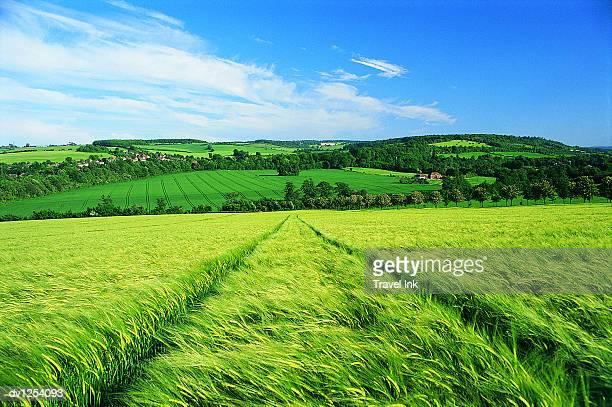 Field of Grass, Eynsford, Kent, United Kingdom