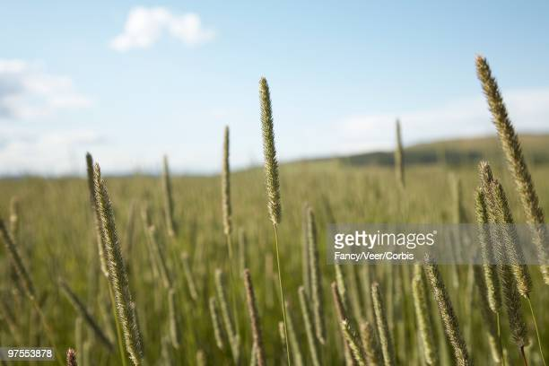 field of grass - climat stock pictures, royalty-free photos & images