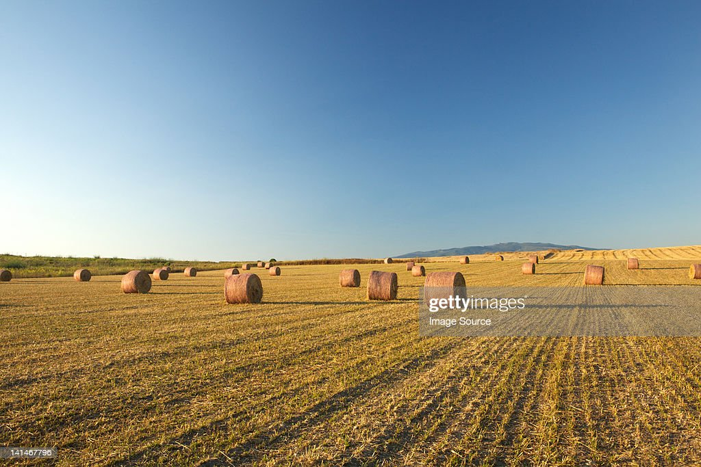 Field of hay bales, Sardinia : Stock Photo