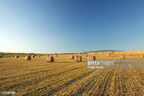 Field of hay bales, Sardinien