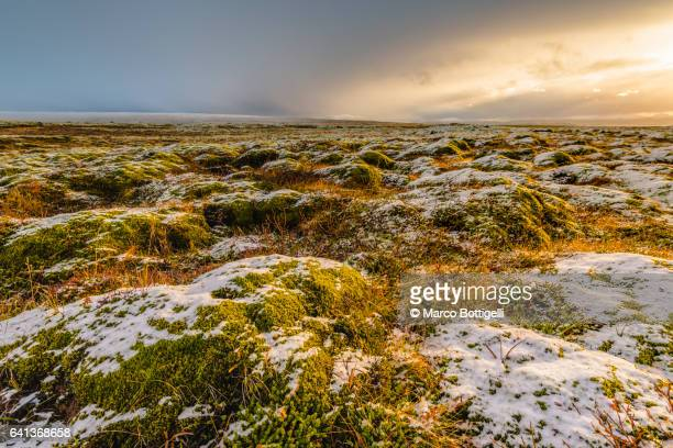 Field of lava with moss and snow, Iceland.