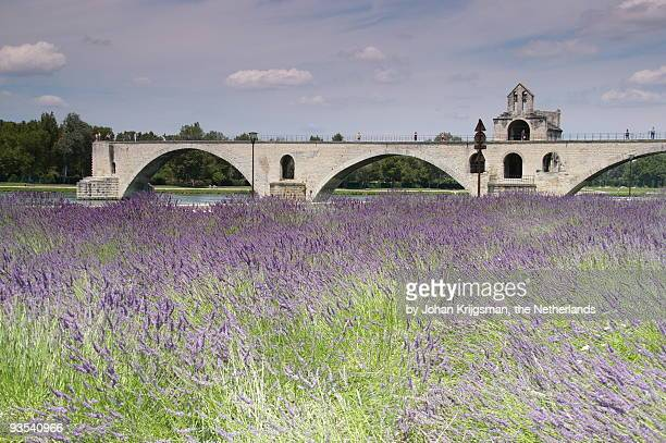field of lavenders and st. benezet's bridge - rhone stock pictures, royalty-free photos & images