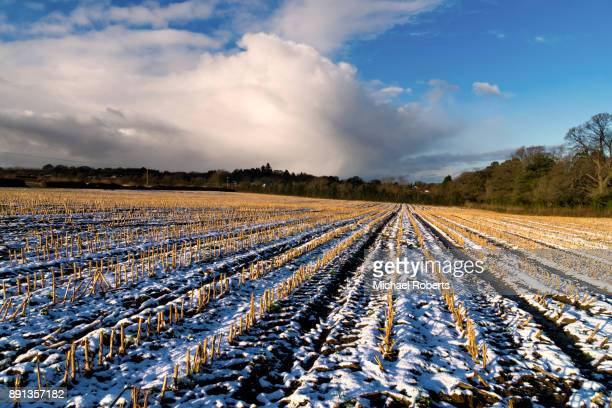 Field of maize stubble in the snow with snow clouds beyond, in the Wye Valley Area of Outstanding Natural Beauty