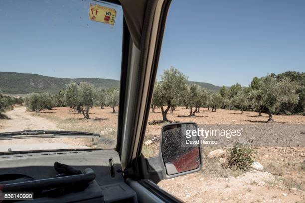 A field of olive trees is seen by the Entrepenas reservoir side second largest water reservoir feeding the Segura River and Spain's Southeastern...