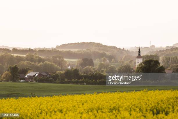 A field of rape is pictured in front of a village with a church on April 29 2018 in Kunnersdorf Germany