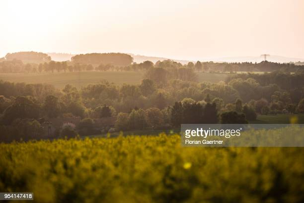 Field of rape is pictured in front of hills in the evening light on April 29, 2018 in Kunnersdorf, Germany.
