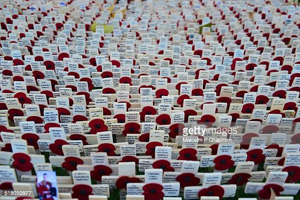 field of remembrance, poppy day, westminster abbey - remembrance sunday stock pictures, royalty-free photos & images