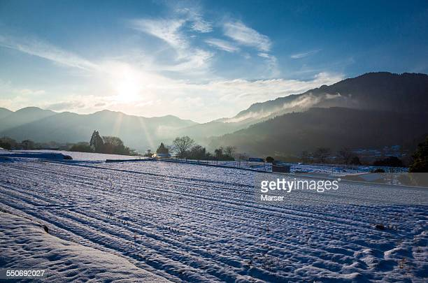 Field of rice paddy covered with snow