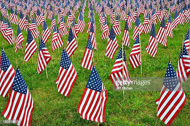 Field of small American Flags