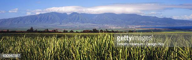 field of sugar cane with the pacific ocean, west maui mountains and clouds in the background - timothy hearsum fotografías e imágenes de stock