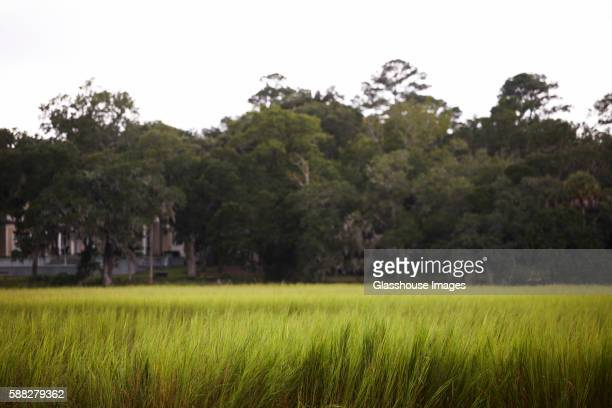 tall grass field aerial field of tall grass with trees in background of stock photos and pictures getty images