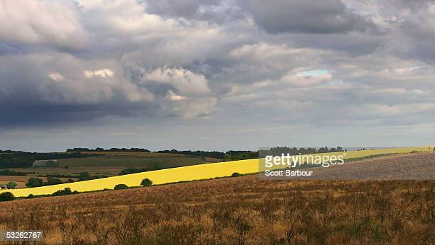 A field of wheat grows in the chalk downlands July 19 2005 south of Salisbury England The future shape of Britain's farming industry lies in the...