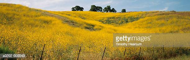 field of wildflowers - timothy hearsum stock pictures, royalty-free photos & images