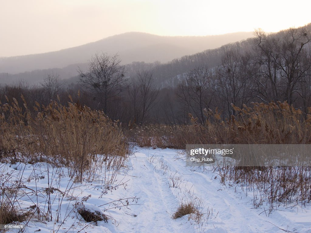 Field road in the winter evening : Stock Photo