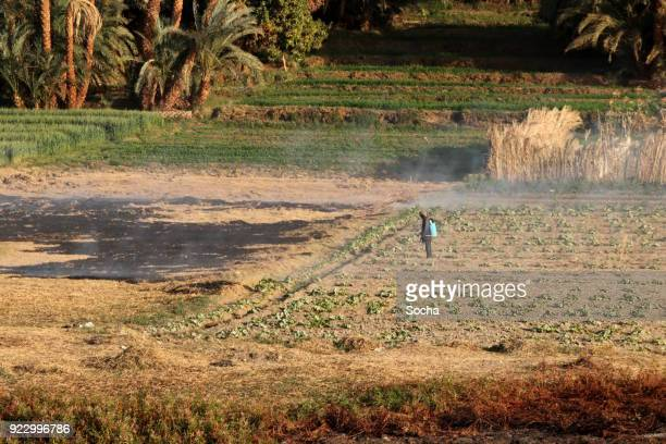 field stubble burning - north africa stock pictures, royalty-free photos & images