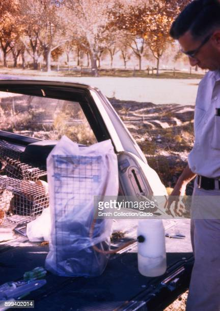 A field technician giving the anesthetics to an animal in the cage in the back of a station wagon during the arbovirus field study 1974 Image...