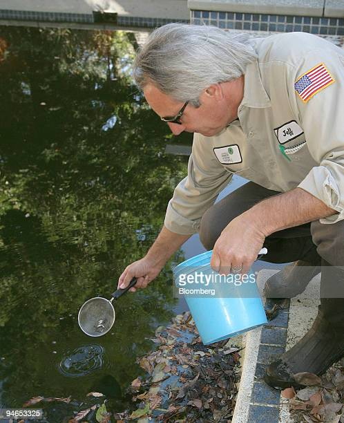 Field Technician Jeff Gay with the SacramentoYolo Mosquito and Vector Control District releases Gambusia affinis or mosquitofish into a unmaintained...