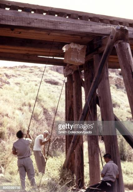 Field technicians using a box and long sticks to catch bats beneath a railroad bridge for an arbovirus study 1974 Image courtesy Centers for Disease...