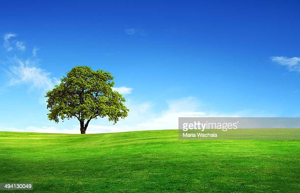 Field, tree and blue sky