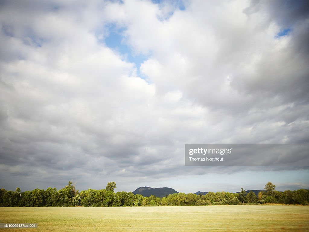 Field, trees and clouds : Stockfoto
