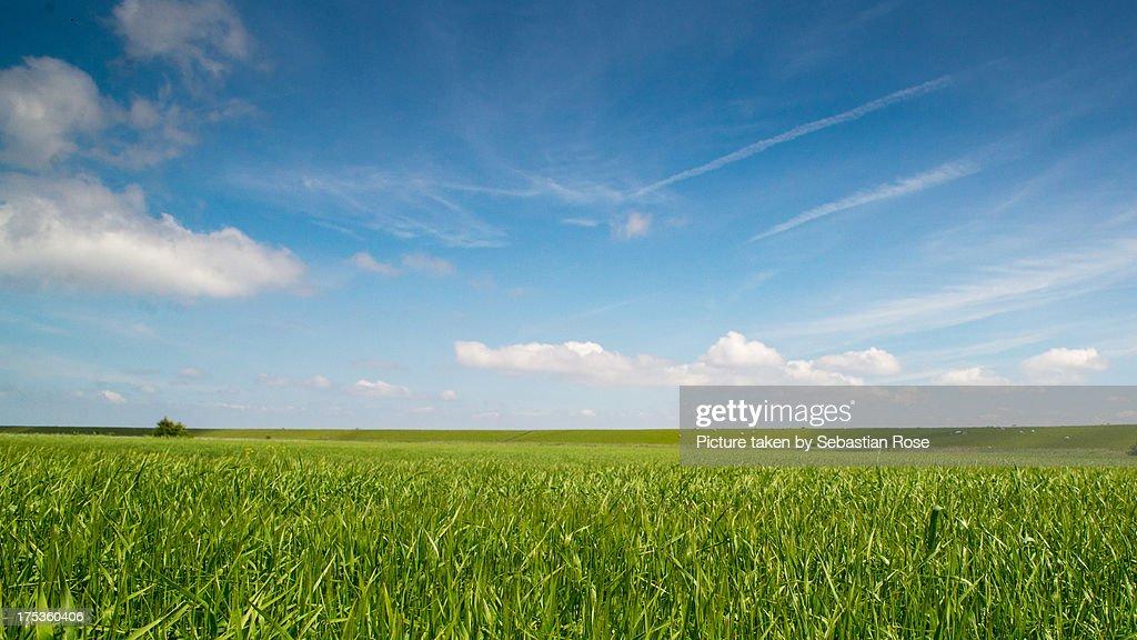 Field under blue sky. : Stock-Foto