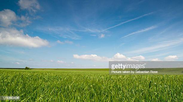 field under blue sky. - horizon over land stock pictures, royalty-free photos & images