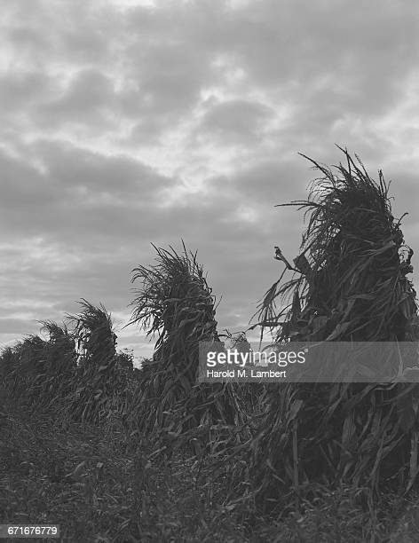 field under cloudy sky - number of people stock pictures, royalty-free photos & images