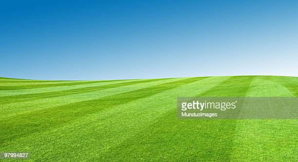 field with blue sky - perfection stock pictures, royalty-free photos & images