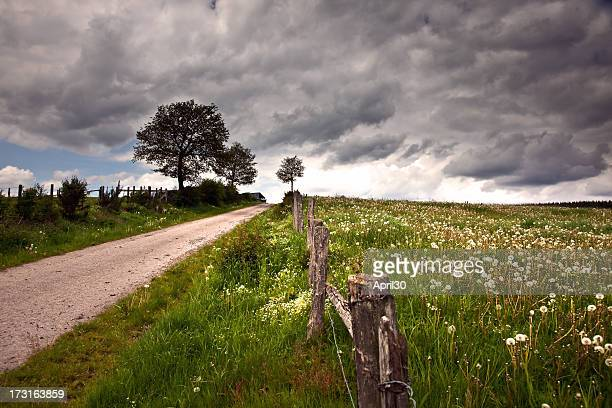 field with dandelions under dark sky in ardennen - belgië stockfoto's en -beelden